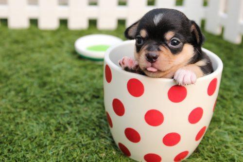 ダウの子犬、アメリカ株、米国株、おすすめ高配当銘柄