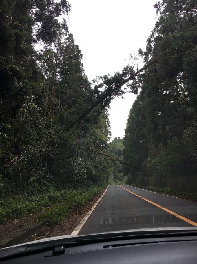 台風15号後の千葉県南部の山道